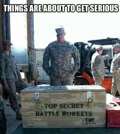 top-secret-battle-monkeys-things-are-about-to-get-serious