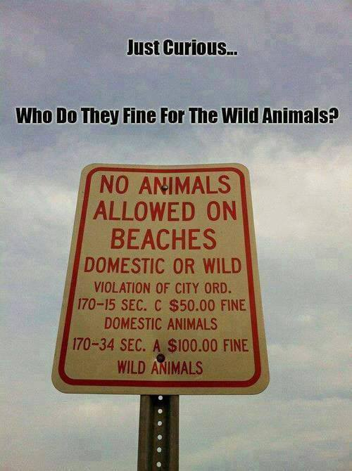 no-animals-allowed-on-beaches