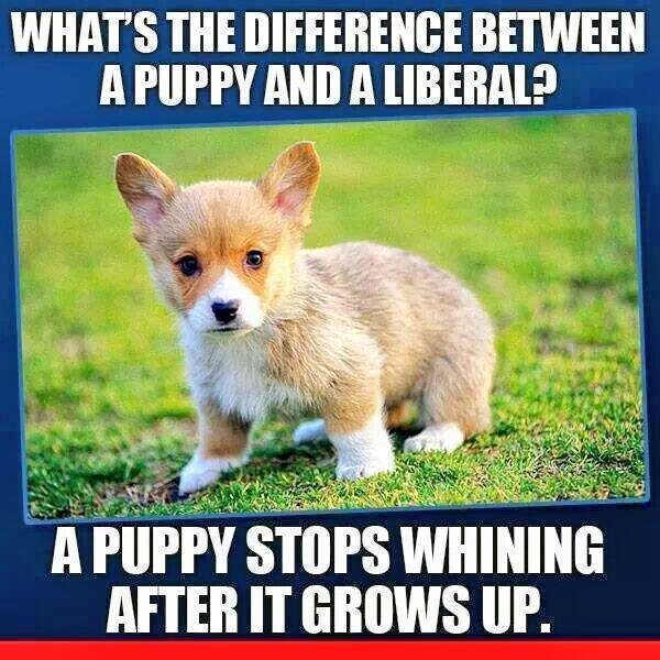 whats-the-difference-between-a-puppy-and-a-liberal